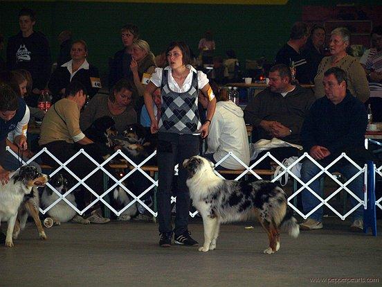Georgie - ASCA-Show Bocholt 2008
