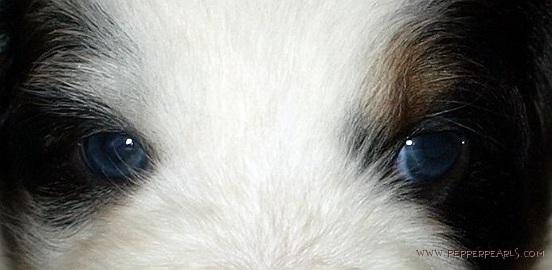 1_Panda Eyes-001
